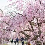 福岡県民の住みたい街第2位!大濠公園エリアの魅力と賃貸の相場は?