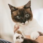 賃貸マンションはペット不可?トラブルにならない3つの交渉で、ペットと一緒に暮らそう